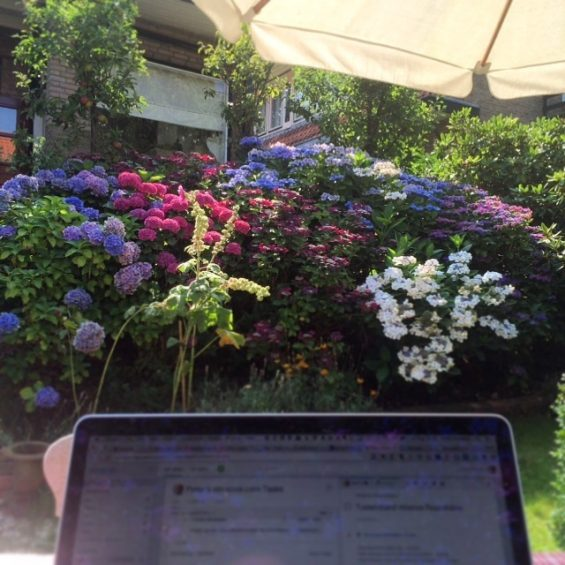 The view from my open office